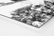 Fans auf dem Baum als auf Alu-Dibond kaschierter Fotoabzug (Detail)