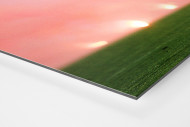 Materazzi, Rui Costa und der Rauch als auf Alu-Dibond kaschierter Fotoabzug (Detail)