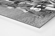Halle 1972 als auf Alu-Dibond kaschierter Fotoabzug (Detail)