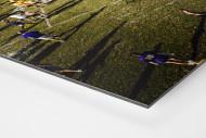 Auf dem Rasen im Tiger Stadium als auf Alu-Dibond kaschierter Fotoabzug (Detail)