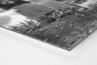Damengolf in Ranelagh als auf Alu-Dibond kaschierter Fotoabzug (Detail)