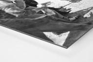 Anfeuern bei der Tour 1930 als auf Alu-Dibond kaschierter Fotoabzug (Detail)