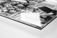 Dixie und der Pokal als Direktdruck auf Alu-Dibond hinter Acrylglas (Detail)