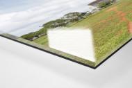 Baum vor dem Estádio Nacional de Brasília als Direktdruck auf Alu-Dibond hinter Acrylglas (Detail)
