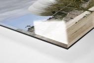 Palmen in Port Elizabeth als Direktdruck auf Alu-Dibond hinter Acrylglas (Detail)