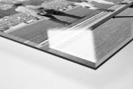 Geißbock Hennes als Direktdruck auf Alu-Dibond hinter Acrylglas (Detail)