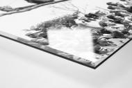 Fans auf dem Baum als Direktdruck auf Alu-Dibond hinter Acrylglas (Detail)