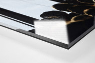 Freiburg Fahne als Direktdruck auf Alu-Dibond hinter Acrylglas (Detail)