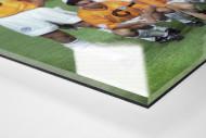 Hertha in Istanbul als Direktdruck auf Alu-Dibond hinter Acrylglas (Detail)