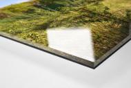 Verlassene Stadien - Marl (1) als Direktdruck auf Alu-Dibond hinter Acrylglas (Detail)