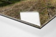 Verlassene Stadien - Solingen (2) als Direktdruck auf Alu-Dibond hinter Acrylglas (Detail)