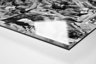Mit Bobby-Helm im Highbury als Direktdruck auf Alu-Dibond hinter Acrylglas (Detail)