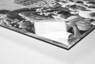 Pionier in Neubrandenburg als Direktdruck auf Alu-Dibond hinter Acrylglas (Detail)