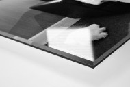 Melancholisches Maskottchen als Direktdruck auf Alu-Dibond hinter Acrylglas (Detail)