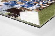 Hertha 1978/79 als Direktdruck auf Alu-Dibond hinter Acrylglas (Detail)