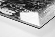 Fans auf der Leiter (1) als Direktdruck auf Alu-Dibond hinter Acrylglas (Detail)