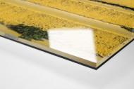 Tribüne Bölle (2) als Direktdruck auf Alu-Dibond hinter Acrylglas (Detail)
