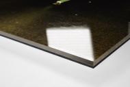 MSV-Fan als Direktdruck auf Alu-Dibond hinter Acrylglas (Detail)