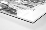 Festschnallen bei der Tour 1949 als Direktdruck auf Alu-Dibond hinter Acrylglas (Detail)