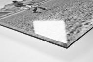 Rugby in Paris als Direktdruck auf Alu-Dibond hinter Acrylglas (Detail)