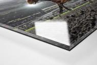 Galopprennbahn in Meydan als Direktdruck auf Alu-Dibond hinter Acrylglas (Detail)