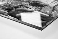Mailand-Sanremo 1955 als Direktdruck auf Alu-Dibond hinter Acrylglas (Detail)