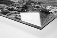 Schüler schauen die Tour 1958 als Direktdruck auf Alu-Dibond hinter Acrylglas (Detail)