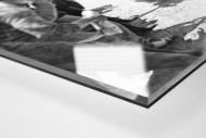 Anfeuern bei der Tour 1930 als Direktdruck auf Alu-Dibond hinter Acrylglas (Detail)