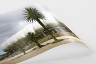 Palmen in Port Elizabeth als FineArt-Print