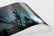 Auf den Bäumen bei Flutlicht als FineArt-Print