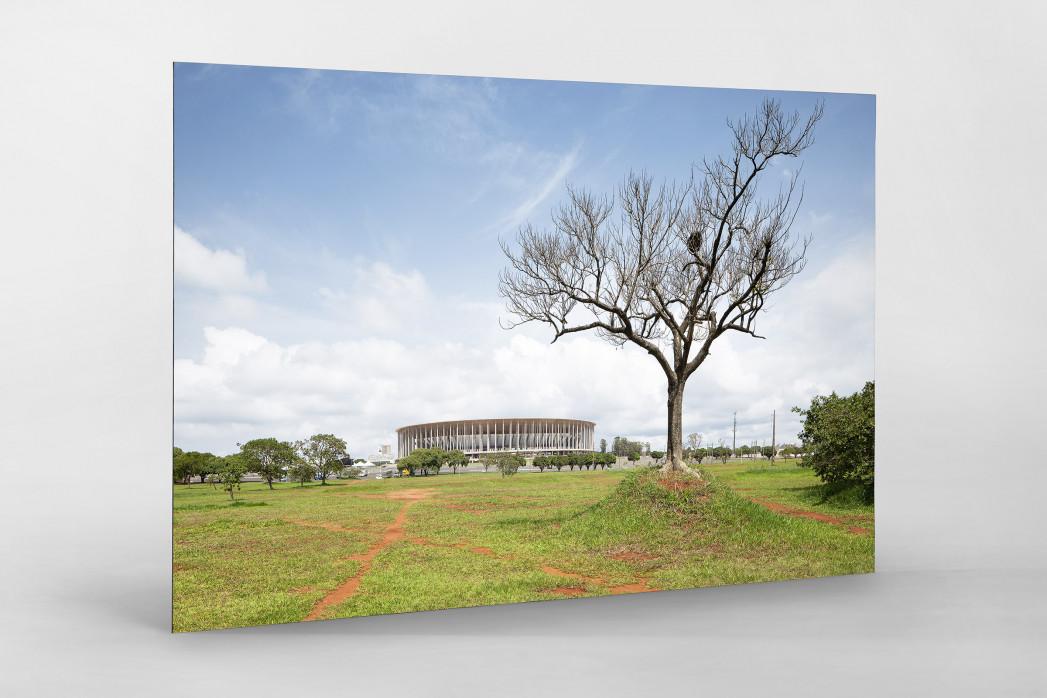 Baum vor dem Estádio Nacional de Brasília als auf Alu-Dibond kaschierter Fotoabzug