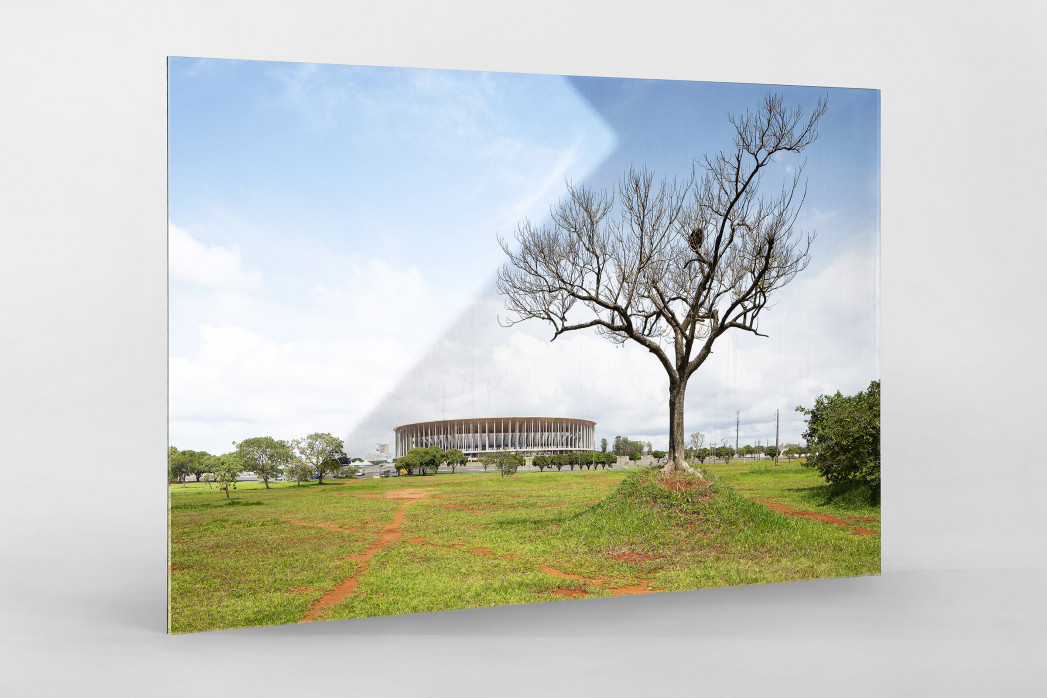 Baum vor dem Estádio Nacional de Brasília als Direktdruck auf Alu-Dibond hinter Acrylglas