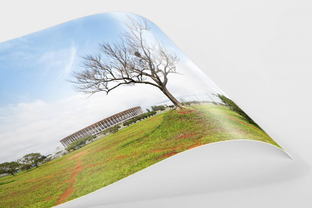 Baum vor dem Estádio Nacional de Brasília als FineArt-Print