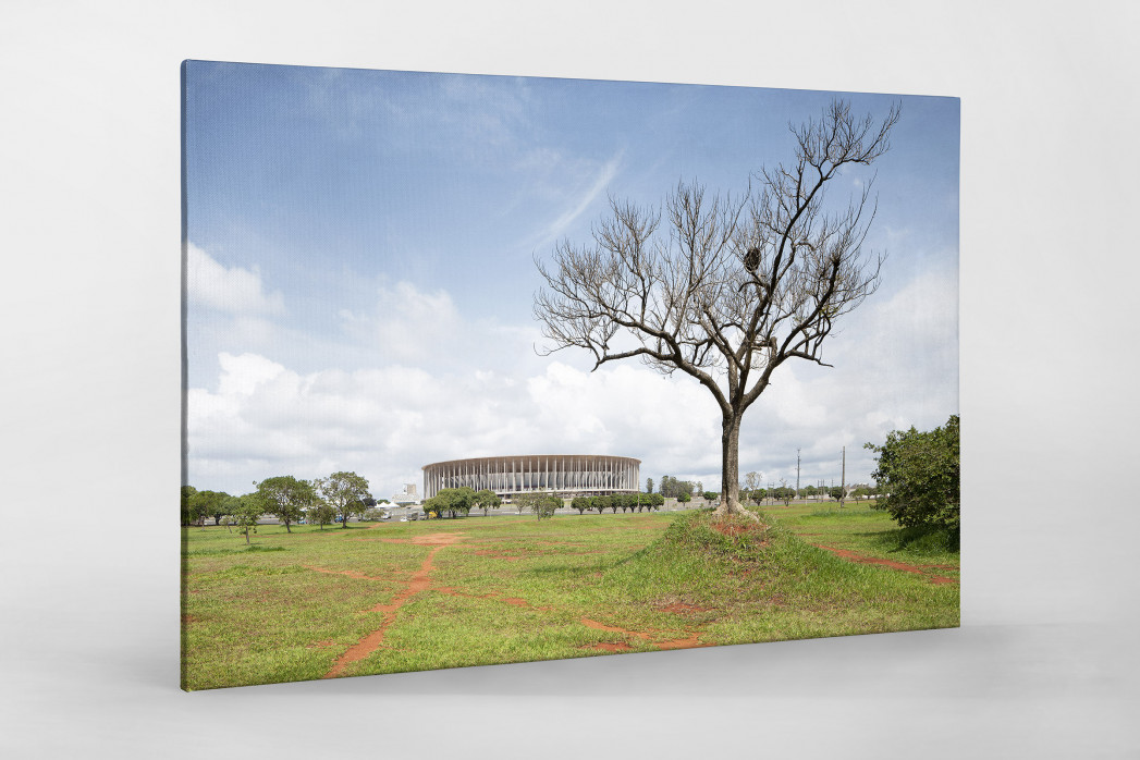Baum vor dem Estádio Nacional de Brasília als Leinwand auf Keilrahmen gezogen
