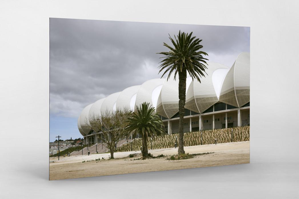 Palmen in Port Elizabeth als auf Alu-Dibond kaschierter Fotoabzug