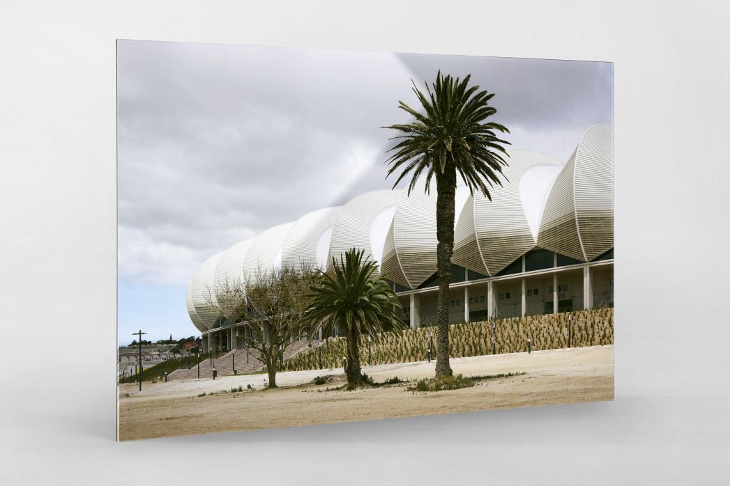 Palmen in Port Elizabeth als Direktdruck auf Alu-Dibond hinter Acrylglas