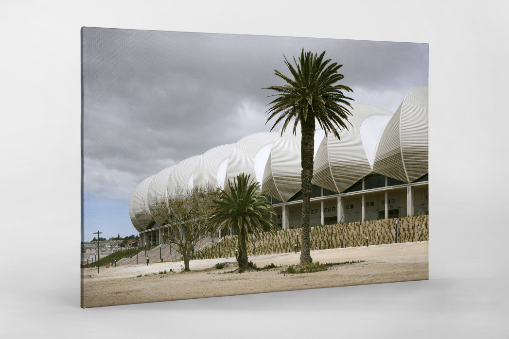 Palmen in Port Elizabeth als Leinwand auf Keilrahmen gezogen