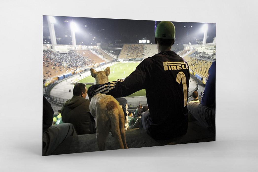 Palmeiras Fan And Dog Watching The Match als auf Alu-Dibond kaschierter Fotoabzug