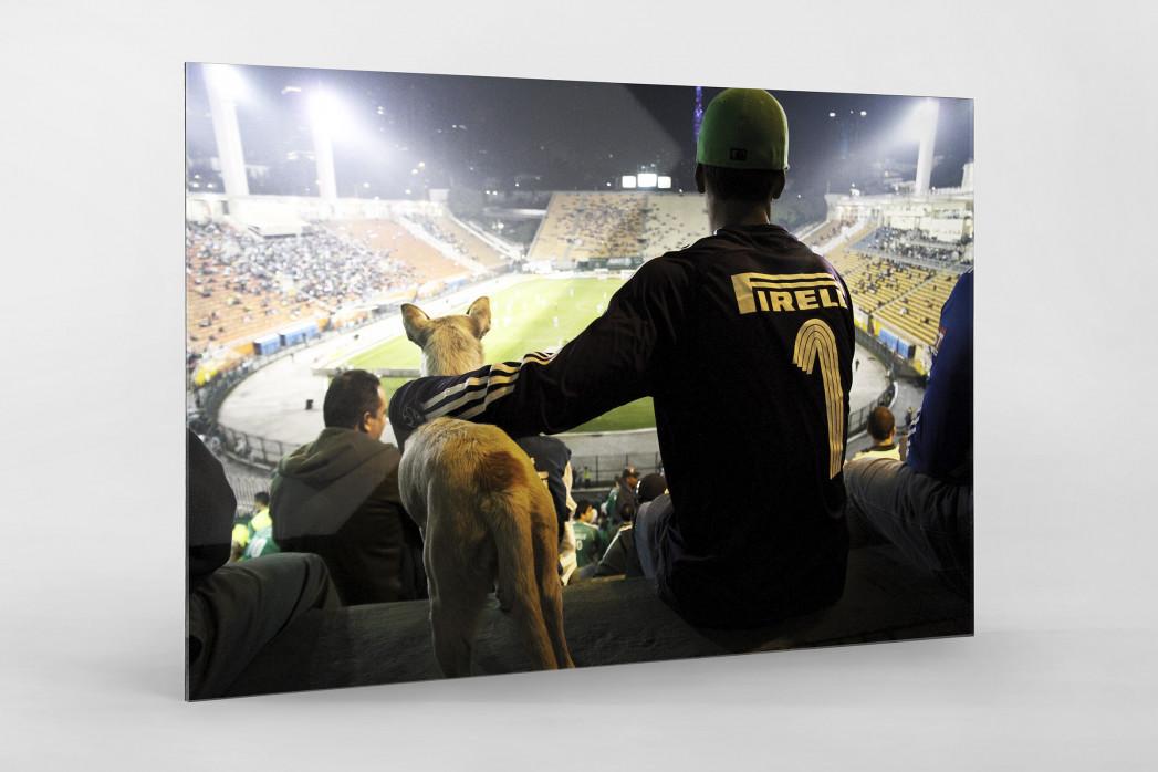 Palmeiras Fan And Dog Watching The Match als Direktdruck auf Alu-Dibond hinter Acrylglas