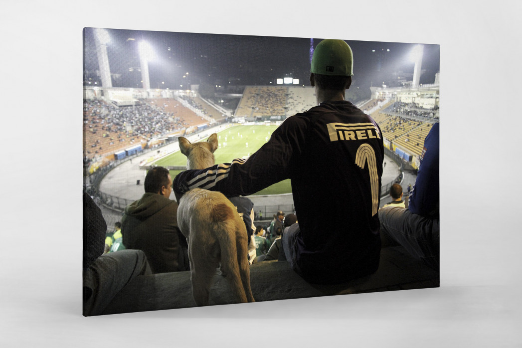 Palmeiras Fan And Dog Watching The Match als Leinwand auf Keilrahmen gezogen