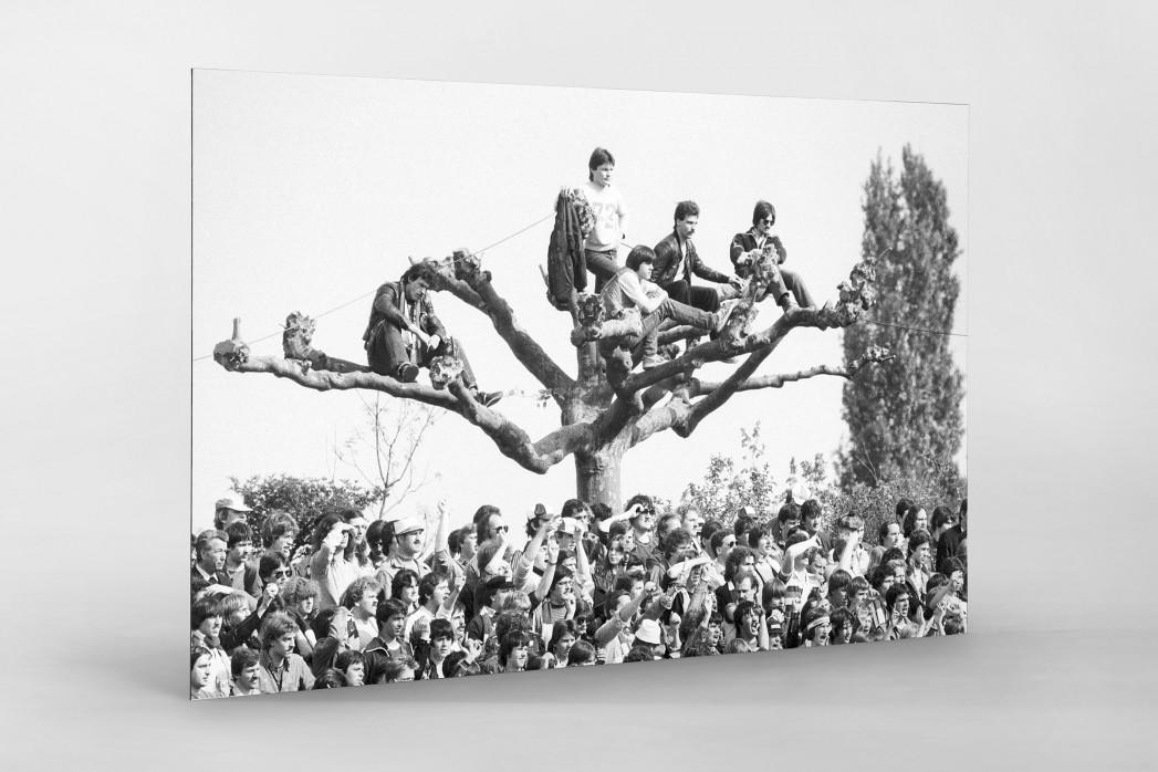 Fans auf dem Baum als auf Alu-Dibond kaschierter Fotoabzug