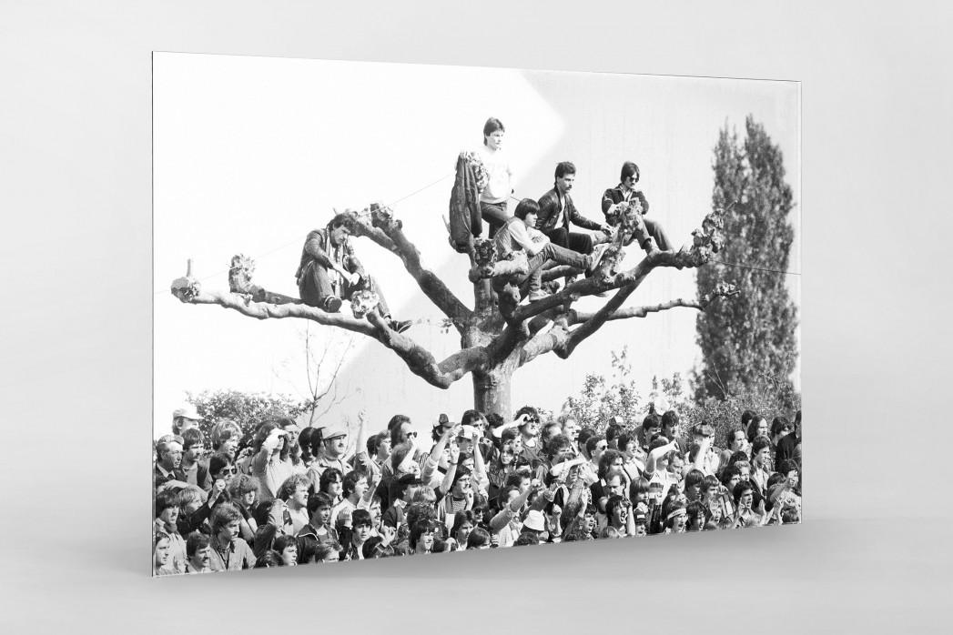 Fans auf dem Baum als Direktdruck auf Alu-Dibond hinter Acrylglas