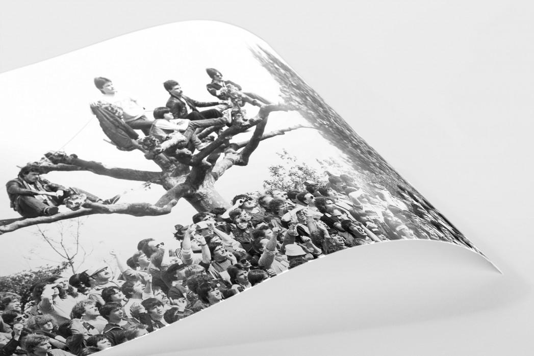 Fans auf dem Baum als FineArt-Print
