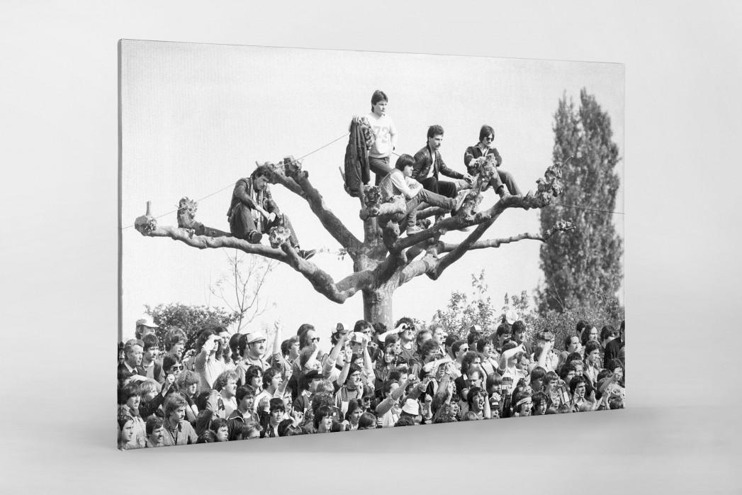 Fans auf dem Baum als Leinwand auf Keilrahmen gezogen