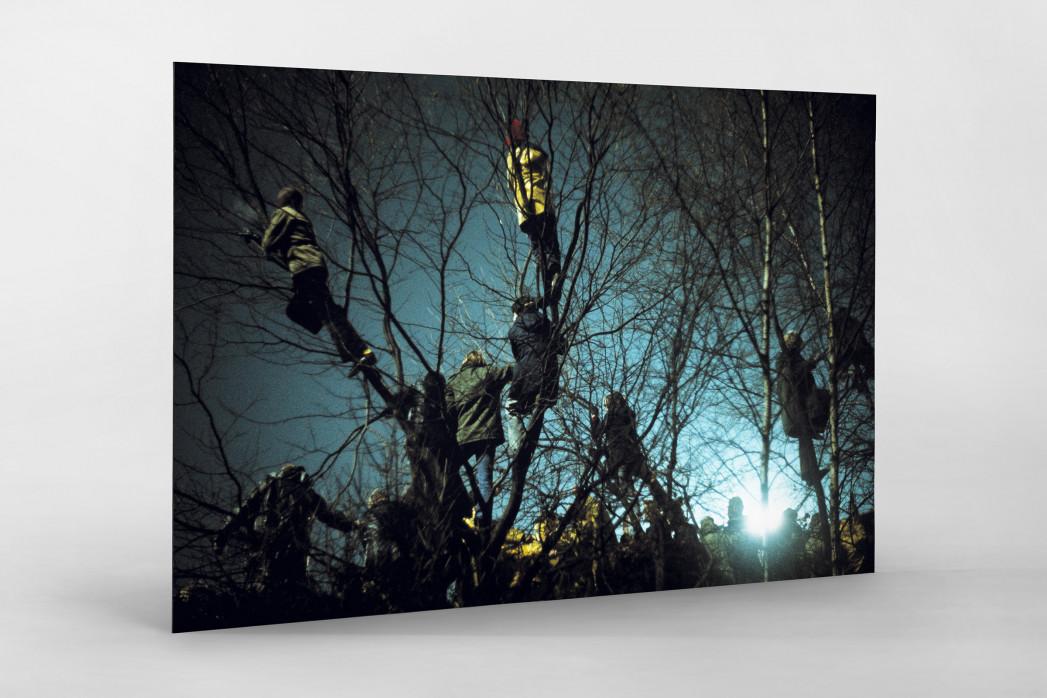 Auf den Bäumen bei Flutlicht als auf Alu-Dibond kaschierter Fotoabzug