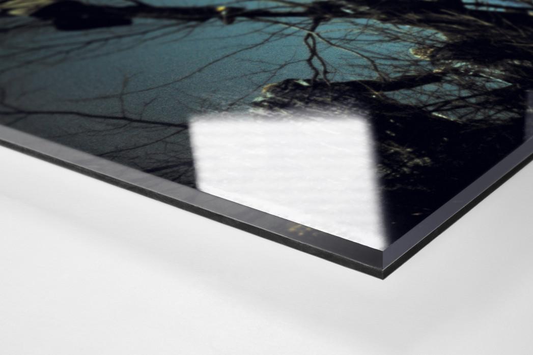 Auf den Bäumen bei Flutlicht als Direktdruck auf Alu-Dibond hinter Acrylglas (Detail)