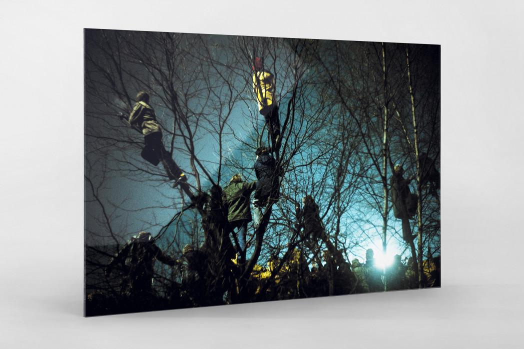 Auf den Bäumen bei Flutlicht als Direktdruck auf Alu-Dibond hinter Acrylglas