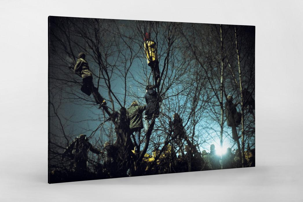 Auf den Bäumen bei Flutlicht als Leinwand auf Keilrahmen gezogen