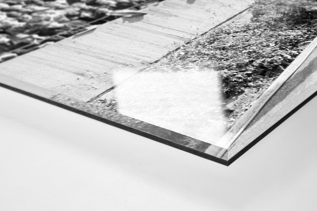 Kameramann vor Zuschauern als Direktdruck auf Alu-Dibond hinter Acrylglas (Detail)