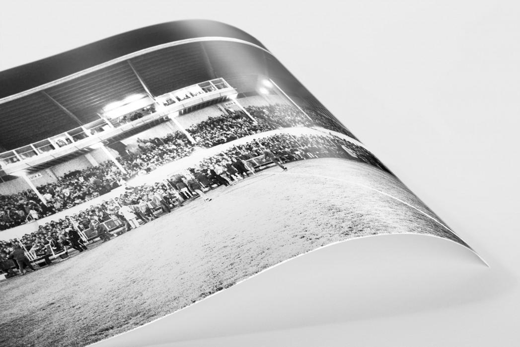 Europapokal an der Grünwalder Straße als FineArt-Print